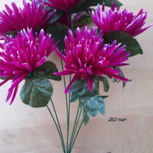 игольчатая хризантема