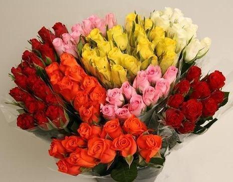 Роза Кения 40 см